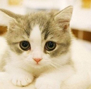 猫咪高清壁纸 第二辑