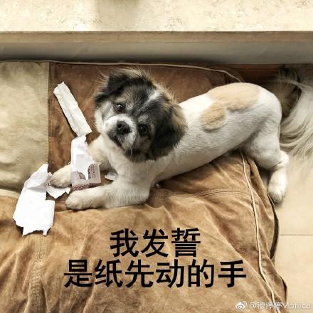 累成狗搞笑图片_累成狗表情包|累成狗的图片下载 高清版 - 比克尔下载