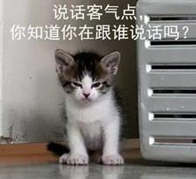 高清凶狠表情9枚带文字版图片版早安v高清表情动态全集大猫咪图片