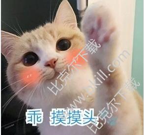 圆脸大眼萌猫的表情包|可爱萌猫表情包 9枚带文字下载