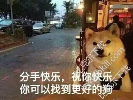 柴犬坐在窗边的表情